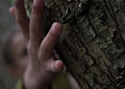 fdp-forest-promo-shot